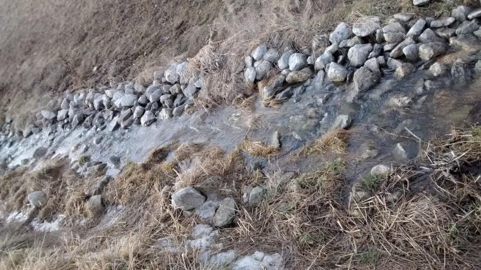 IMG_spring creek (1).jpg