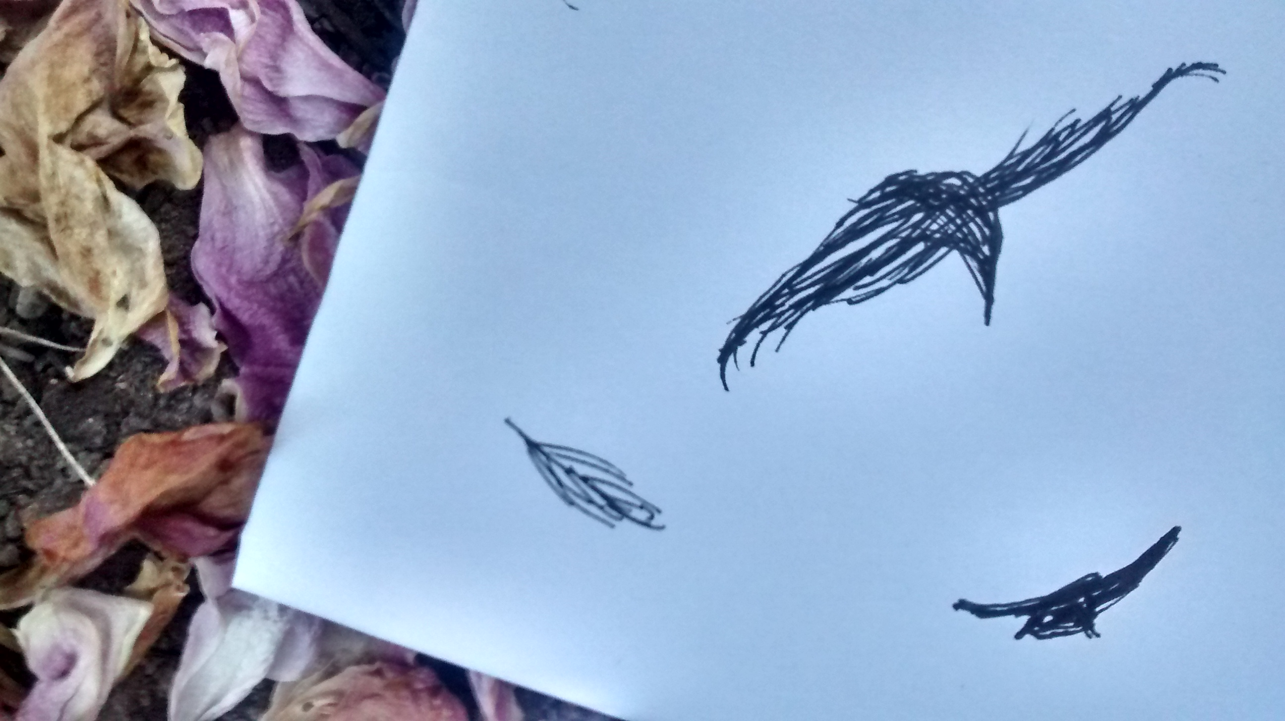 blackbird sketch lying on peony petals